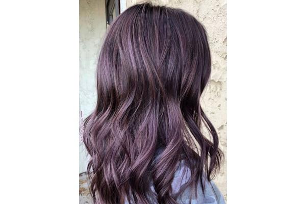 Chocolate lilac