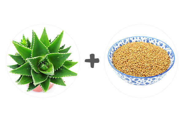 Aloe Vera and Fenugreek for Hair Growth