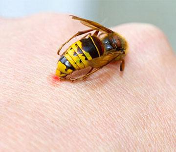 Bee venom