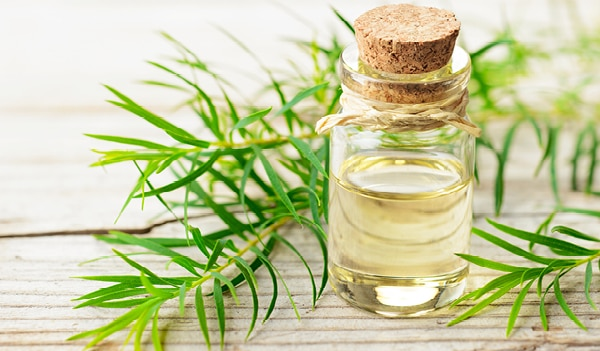 Benefits and uses of tea tree oil for skin