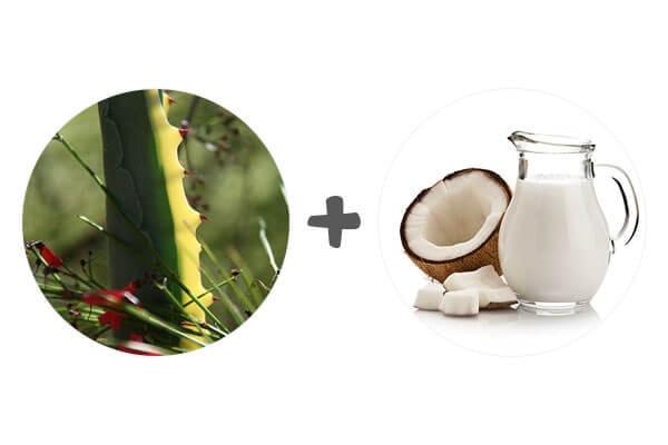 •एलो वेरा जेल और नारियल का दूध (कोकोनट मिल्क)