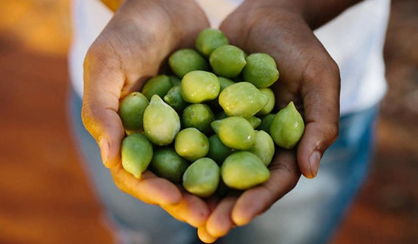 Kakadu plum is the vitamin C powerhouse ingredient your skin needs RN!