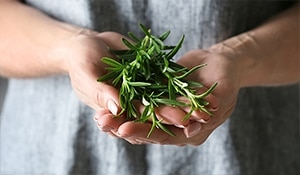 Rosemary – The beauty herb no one talks about