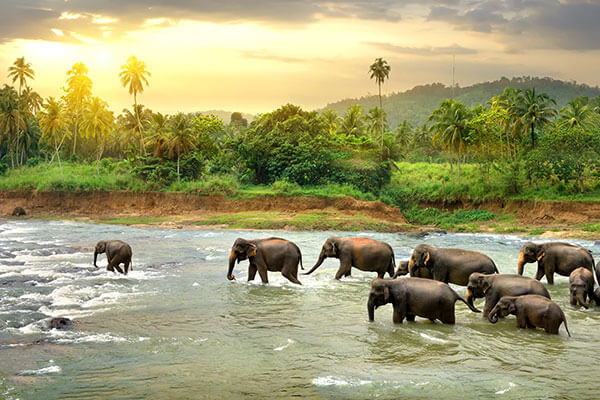 Sri Lanka budget friendly locations for the perfect bachelorette party