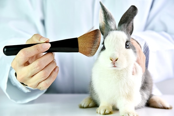 Say 'NO' to animal testing