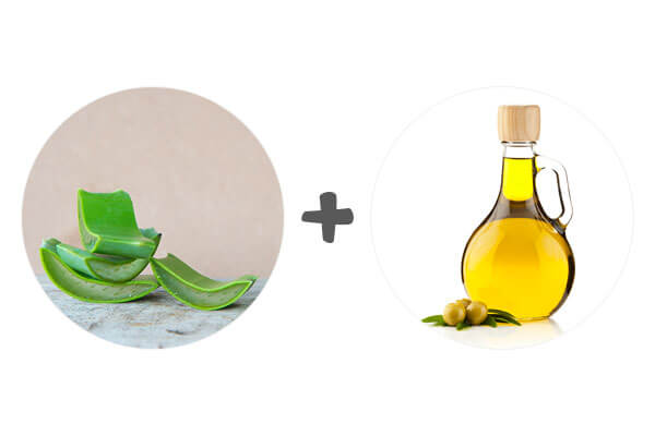 Aloe Vera and Olive Oil for Hair Growth