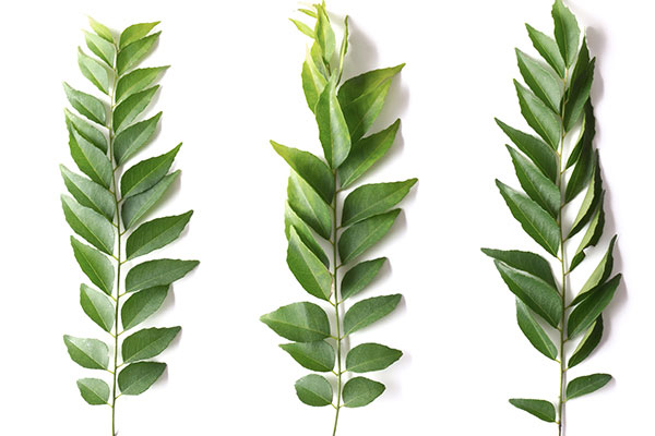 curry leaves oil to darken grey hair