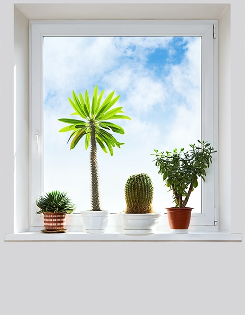 HOW TO CARE FOR YOUR PLANTS THE RIGHT WAY