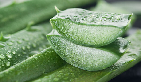 How to incorporate aloe vera into your beauty regimen this summer