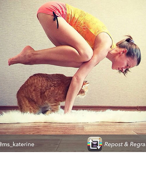 PICTURES THAT PROVE YOGA WITH YOUR PET IS TOTALLY LEGIT