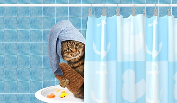 RAIN CARE AND WEAR MEASURES EVERYONE WITH PETS MUST KNOW
