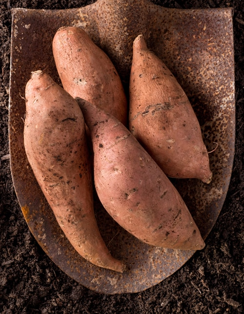 THE GOODNESS OF SWEET POTATOES